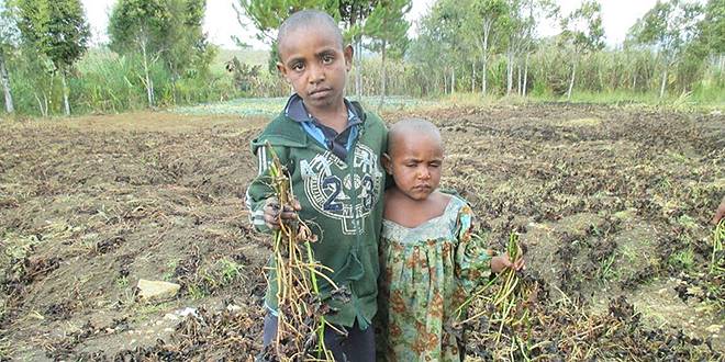 Drought danger: Children in Algi Village in Papua New Guinea with crops affected by the drought. PNG is in the midst of what could be its worst drought in close to 20 years. Photo: AAP