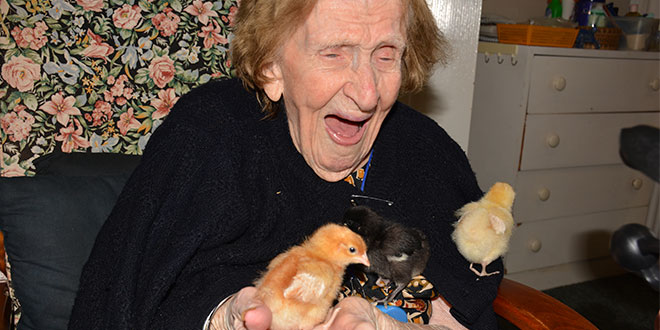 Ruby Duffell with clutch of chicks