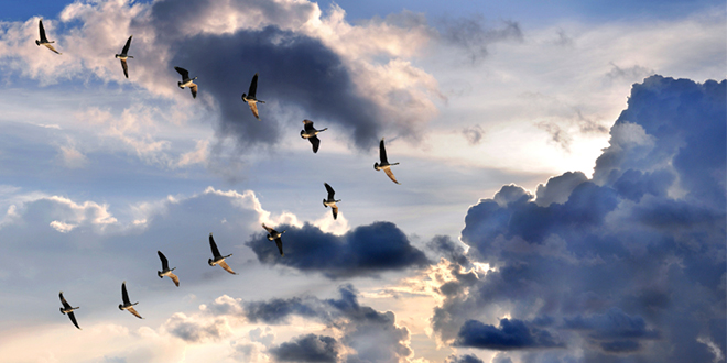 Catholics don't fly alone, we fly with others – uplifting lessons we can learn from geese