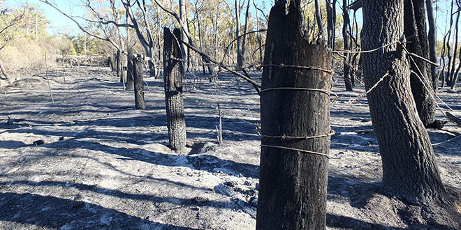 When the news hits close to home –Selina's brush with bushfires burning in the Granite Belt
